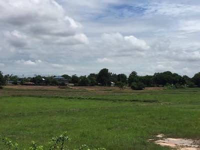 Land for Sale in Sikhio, Nakhonratchasima - Land for sale 28 rai, 3 ngan, Ban Nong Kok, 14 km from the district of Sikhio, suitable for farming