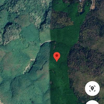 Land for Sale in Mueang Loei, Loei - Sale of land with rubber plantation 50 rai