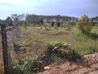 Land for Sale in Klaeng, Rayong - Durian orchard 1.6 million baht (3 year durian)