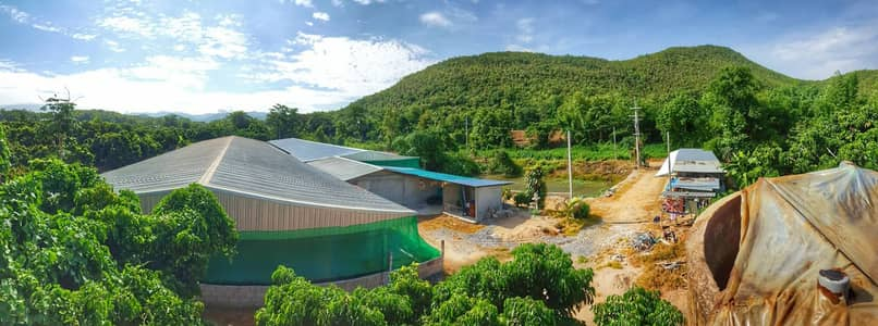 Factory for Sale in Mueang Lamphun, Lamphun - Breeder pig farm