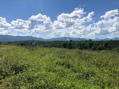 Land for Sale in Phrao, Chiangmai - For sale! Land next to the creek, almost 36 rai, Phrao District, Chiang Mai