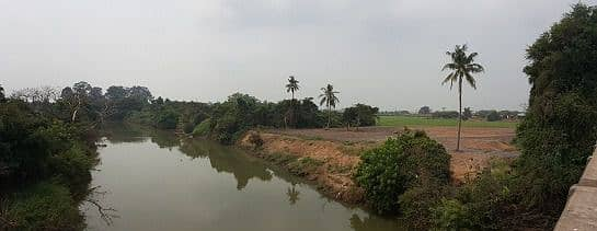 Land for sale next to a beautiful river, has a lot of growth, Bang Ban District, Ayutthaya, 7,500 baht per square meter.