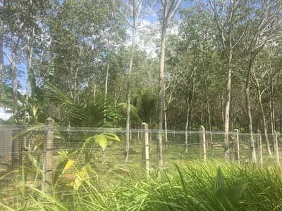Land for Rent in Thalang, Phuket - LDE11 Land for rent, 6 rai rubber plantation, Mai Khao Subdistrict, Thalang District, Phuket Province
