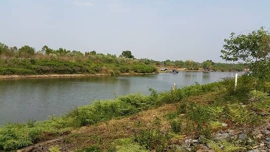 Land for Sale in Khu Mueang, Buriram - Land for sale on the bank of Mun River. Near Ban Khwao Yang Weir