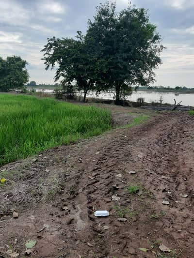 Land for Sale in Phachi, Ayutthaya - The man in the field
