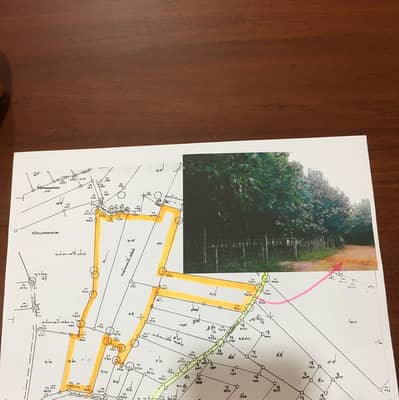 Land for Sale in That Phanom, Nakhonphanom - Rubber plantation, 12 years old, rubber cutting for 6 years, first class quality All 5 plots are title deeds, totaling 85.5 rai.