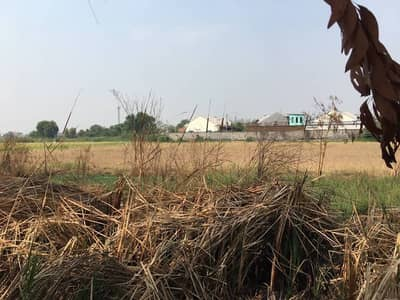 Land for sale in Khlong Nueng, Khlong Luang, Pathum Thani.
