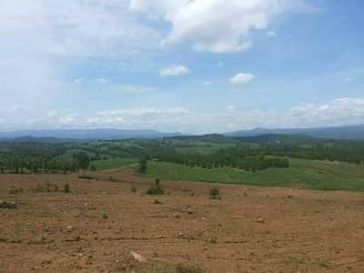 Land for Sale in Lom Kao, Phetchabun - Land for sale