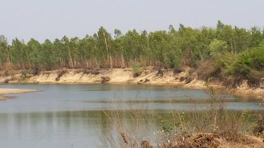 Land for Sale in Khu Mueang, Buriram - Land for sale on the bank of Mun River. Near the Weir Yang, Ban Khwao, Khu Mueang District, Buriram