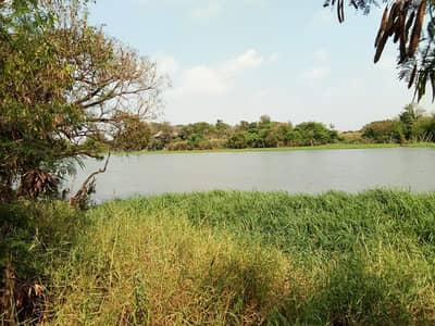 Land for Sale in Bang Len, Nakhonpathom - Land for sale next to the Tha Chin River. 212 square wa. Near Lam Phaya Floating Market, Bang Len District, Nakhon Pathom Province, quiet atmosphere, beautiful view, suitable for building a resort