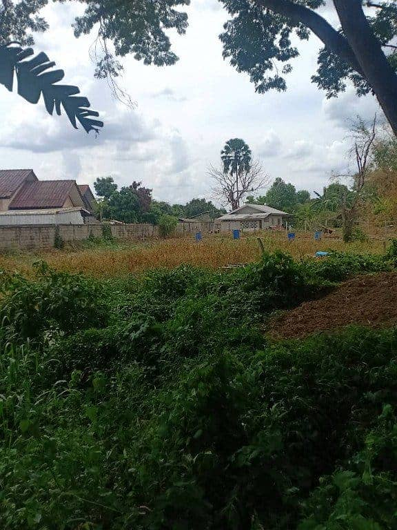 Land for sale Chiang Saen 2 ngan 72 square meters.