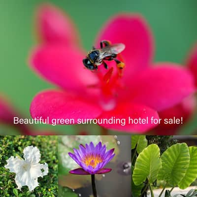 Hotel for Sale in Dan Sai, Loei - Beautiful resort for sale In the middle of the valley