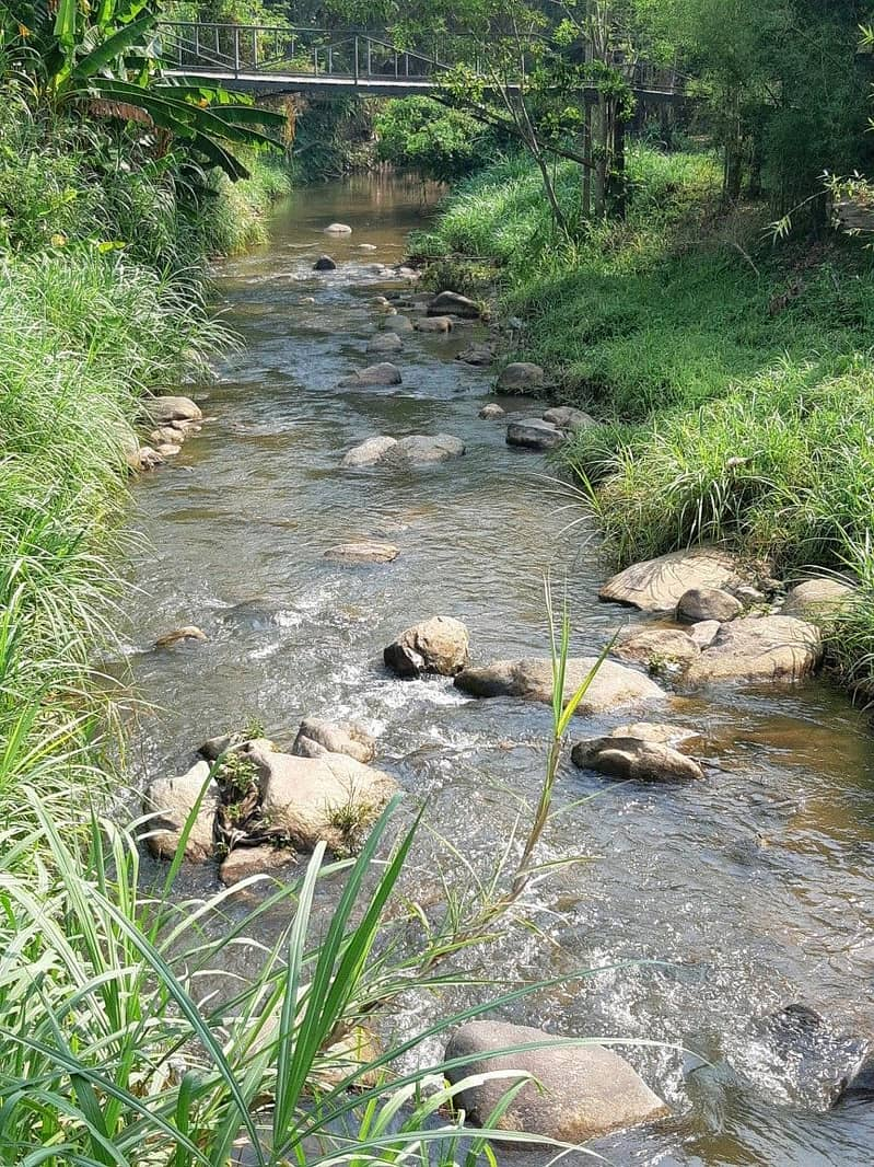 Land for sale next to a beautiful stream, Mae Rim District
