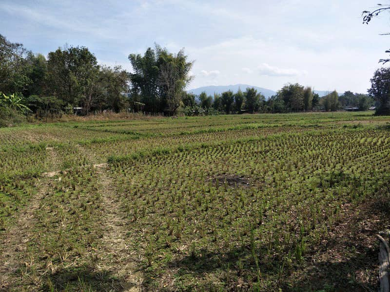 5 rai of land in Thung Pong area, Pai district, Mae Hong Son province