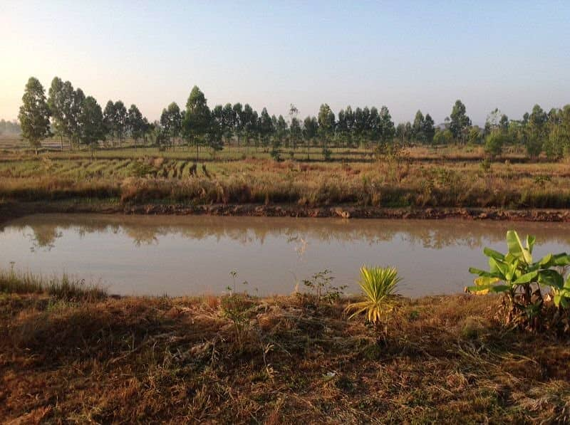 Rent 20 rai of cultivated fields with 1 house, a busy rice mill, a large fish pond, a water tank