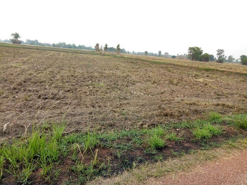 Sales of agricultural land 44 rai can be divided.