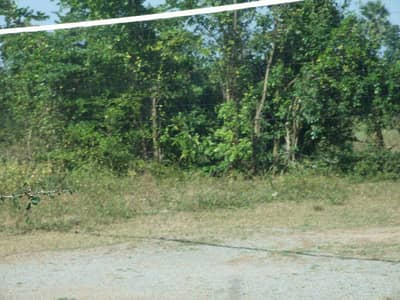 For Rent - Sale of vacant land 120 square meters, Sanam river canal line 80 years Korat