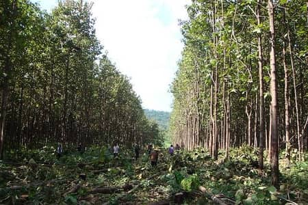 Land for Sale in Wichian Buri, Phetchabun - Land for sale with a total of 23 plots of teak, total area of 2,010 rai.