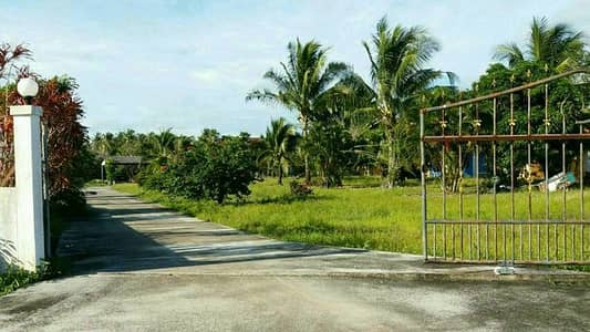 Land for Sale in Thalang, Phuket - Chanote land 4 rai 2 ngan including 5 houses