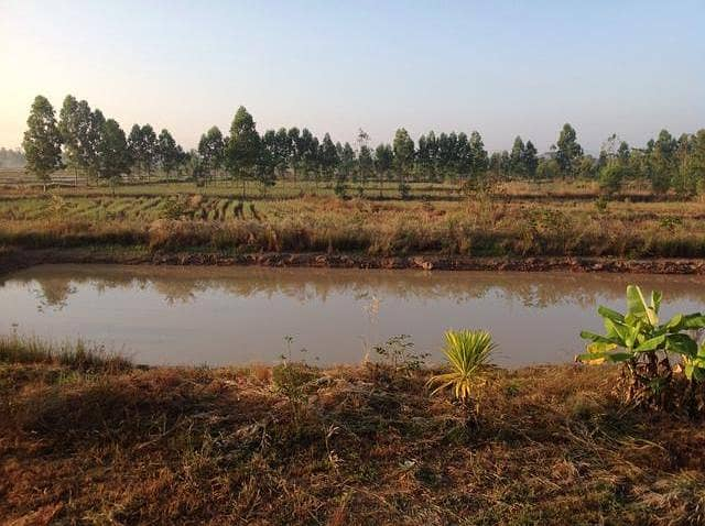 30 rai of rice fields for sale with 2 houses, a busy rice mill, a large fish pond
