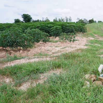Land for Sale in Bo Phloi, Kanchanaburi - Land for sale, suitable for cultivation or rent. There is a pool in the Near Nong Ri Subdistrict Municipality, Bo Phloi District, Kanchanaburi Province